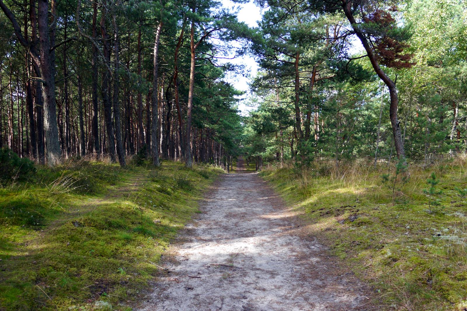 Durch den Wald zur Düne der Kurischen Nehrung.