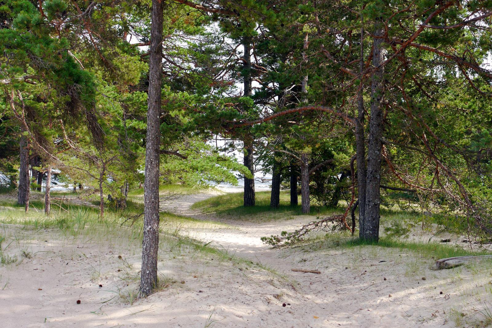 Kap Kolka in Lettland.