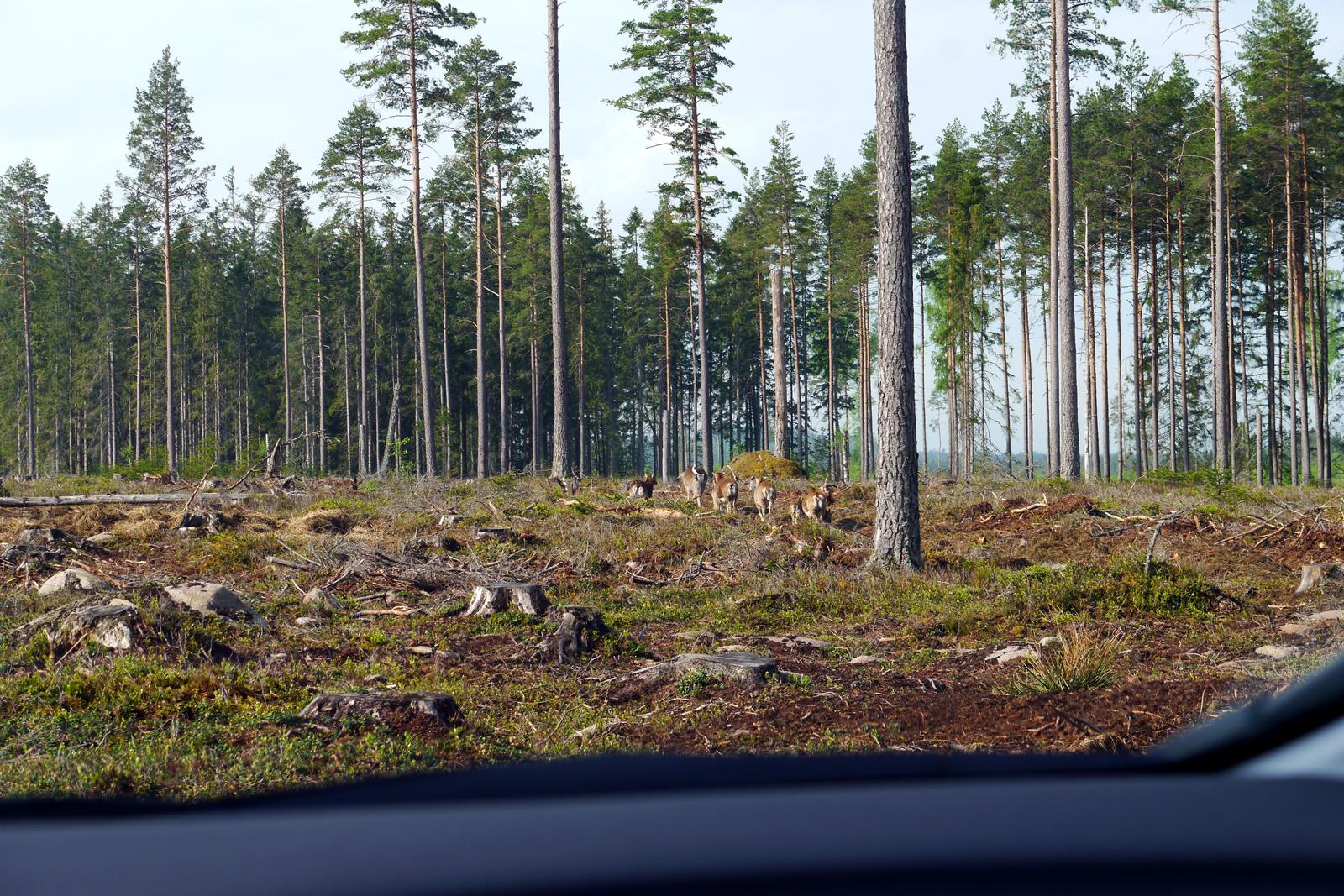 Kosta Safaripark-Smaland-Schweden-2