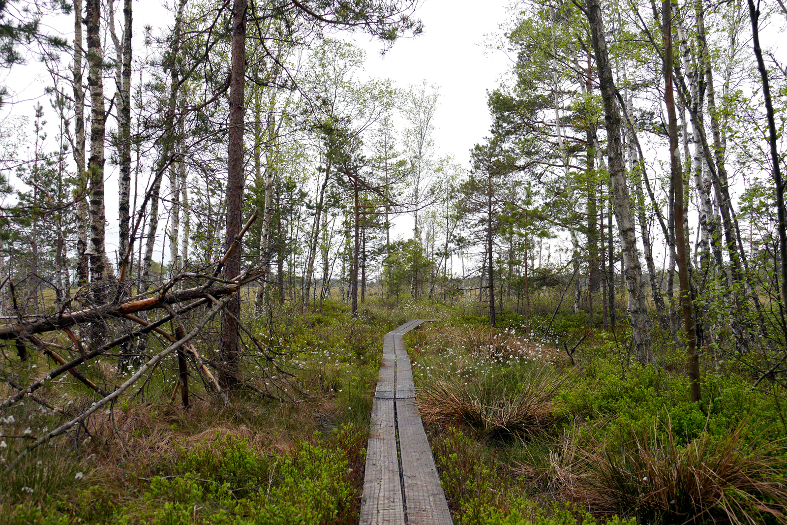 Store Mosse Nationalpark-Smaland-Schweden-Moor-2