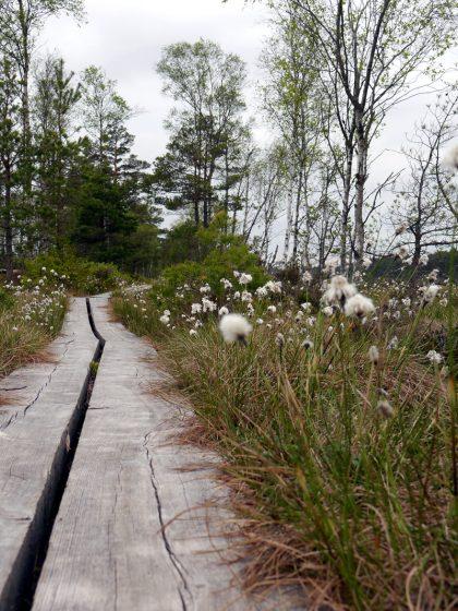 Store Mosse Nationalpark-Smaland-Schweden-Moor-3