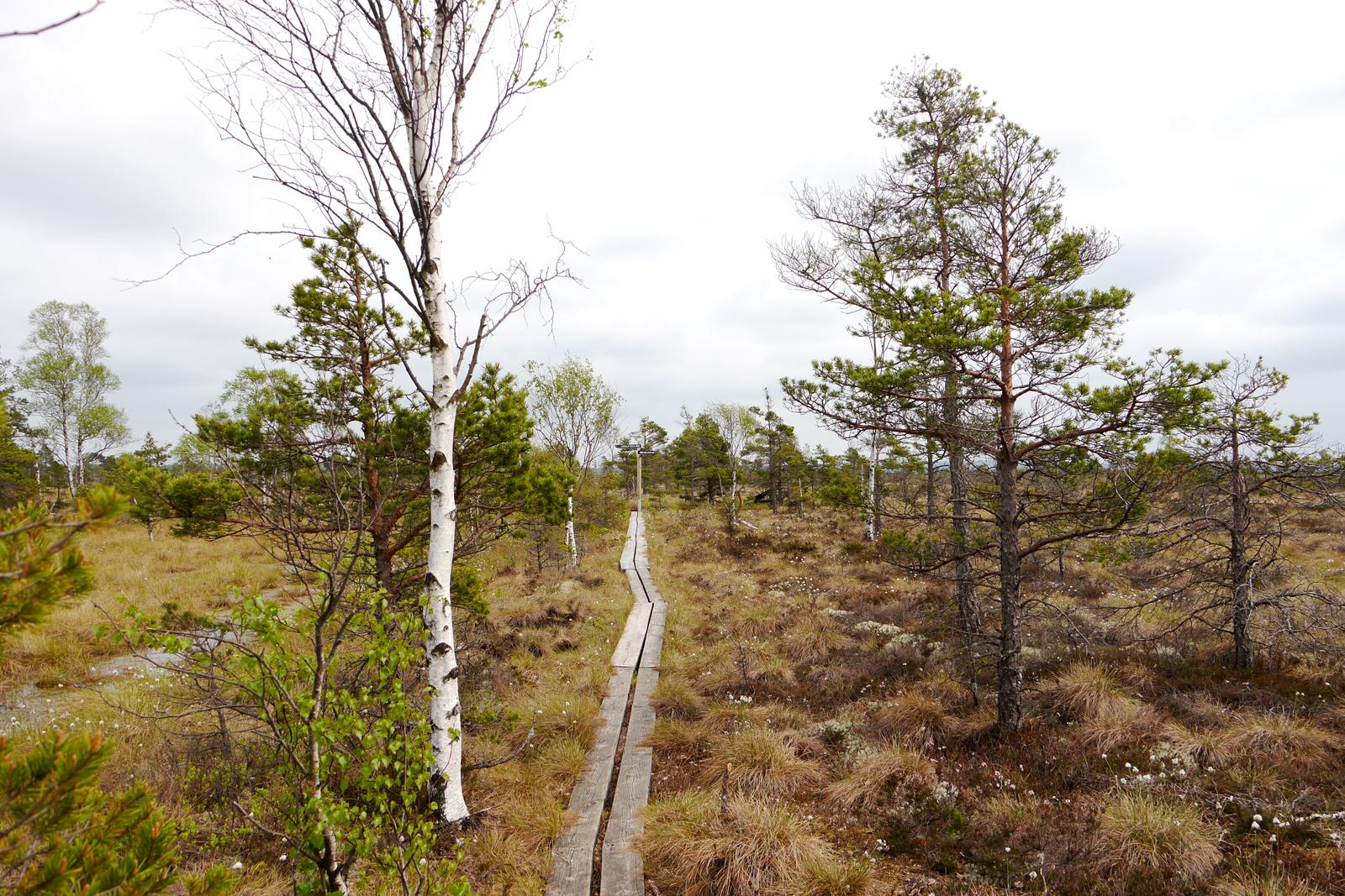 Store Mosse Nationalpark-Smaland-Schweden-Moor-4