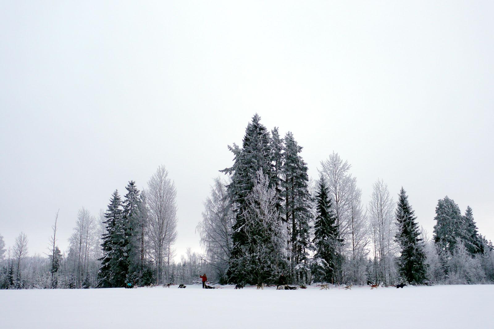 Schlittenhund Tour-Vuokatti-Finnland-Winter