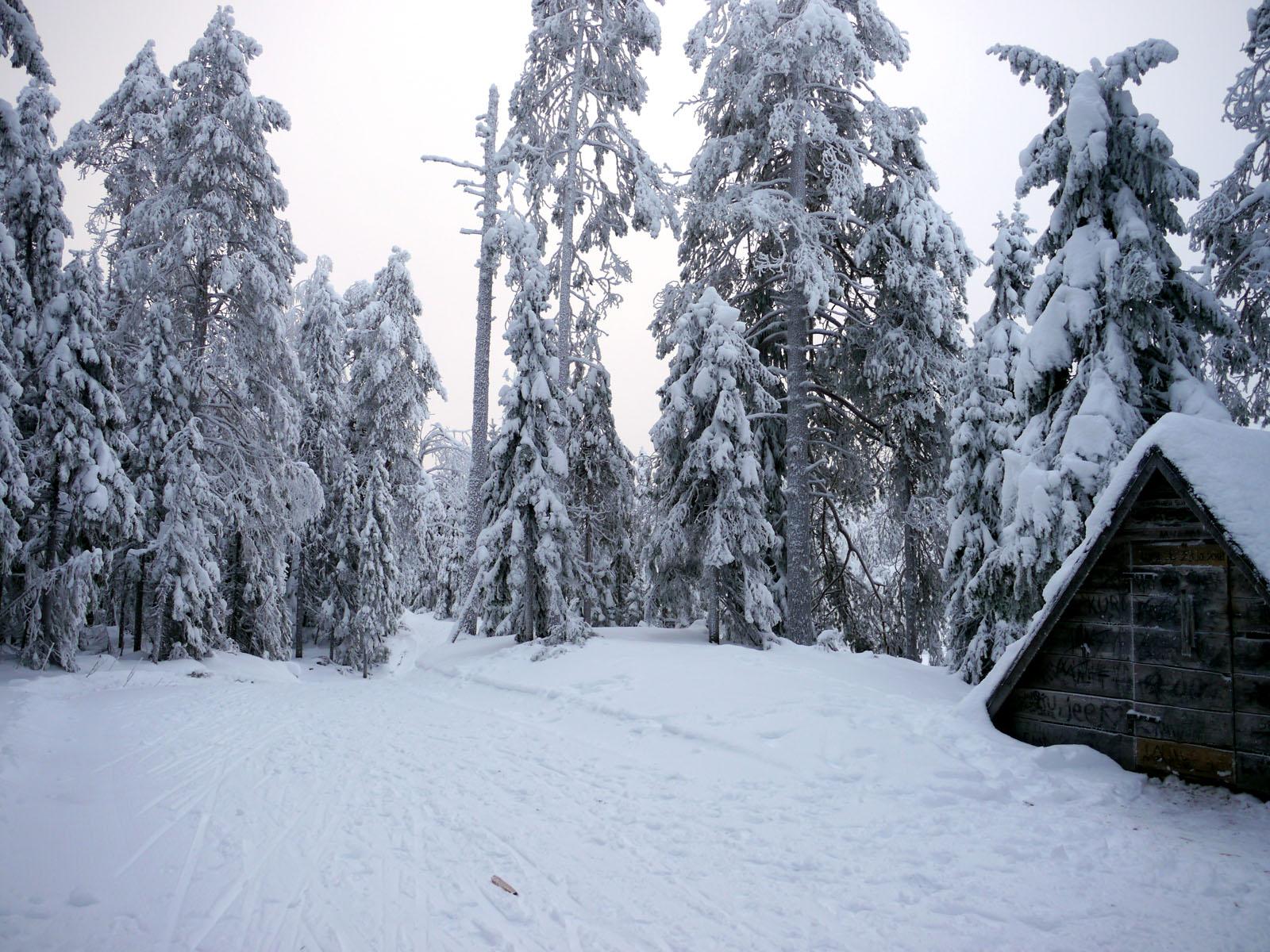Schneeschuh Wanderung-Wald-Vuokatti-Finnland