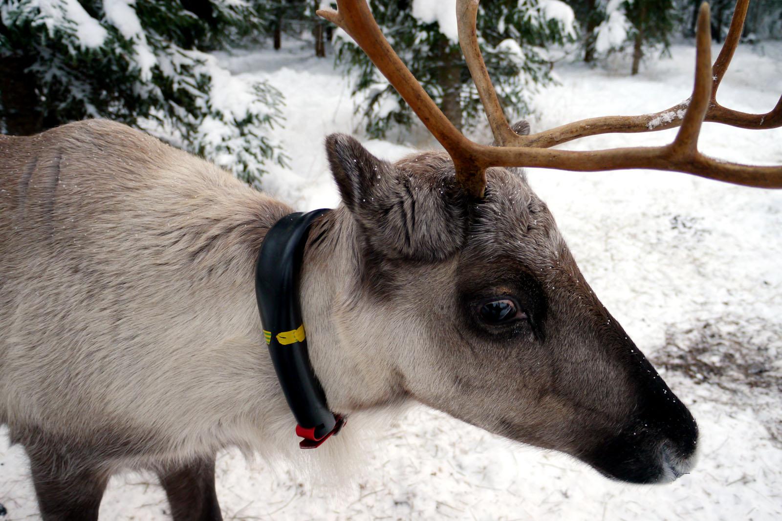 rentier-vuokatti-finnland-winter